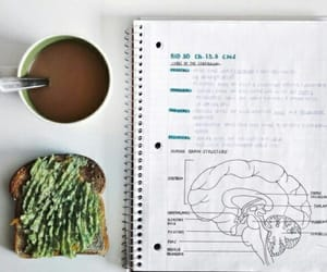 avocado, coffee, and school image