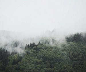 fog and forest image