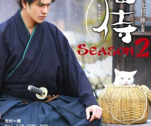 cats, funny, and jdrama image