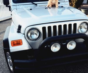 dog, jeep, and car image