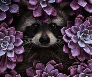 animal, raccoon, and flowers image