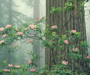 gaia, nature, and pretty image