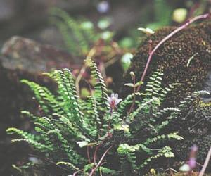 nature, pretty, and greek mythology image