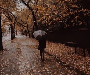 fall, rain, and umbrella image