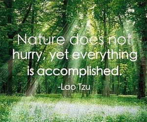 forest, meditation, and quotes image