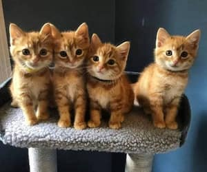 cat, kitty, and kittens image