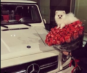 car, roses, and dog image