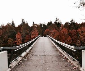 autumn, bridge, and latvia image