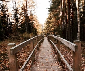 autumn, forest, and latvia image