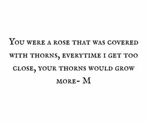 quotes and roses image