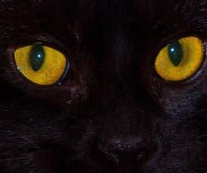 cat, black, and eyes image