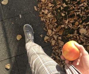 apple, autumn, and beige image