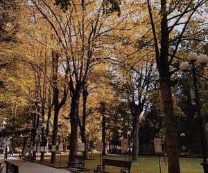 autumn, fall, and Georgia image