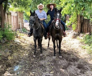 horses, mexico, and rancho image