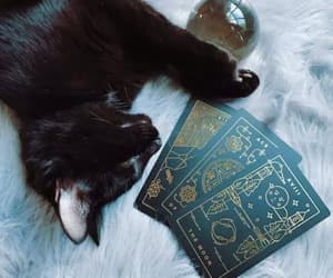 cat, witch, and tarot image