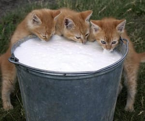 cat, kitten, and milk image