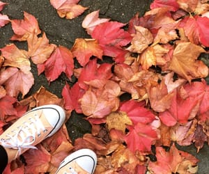 autumn, cold, and converse image