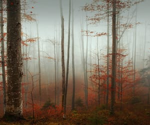 autumn colors, fog, and landscape photography image