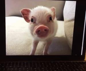 gif, good morning, and pet pig image