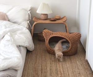 animal, sleepy, and bed image