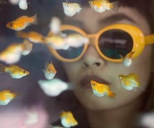 fish, yellow, and aesthetic image