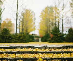 50mm, photography, and sapporo image