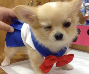 dog, puppy, and sailor moon image