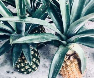 fresco, fruta, and fondos image