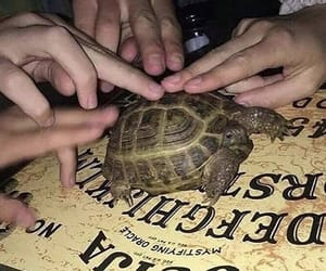 turtle, ouija, and aesthetic image