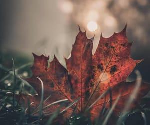 aesthetics, autumn love, and autumn beauty image