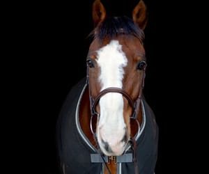 animals, equestrian, and horses image