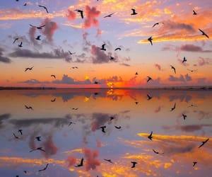 sunset, bird, and sky image