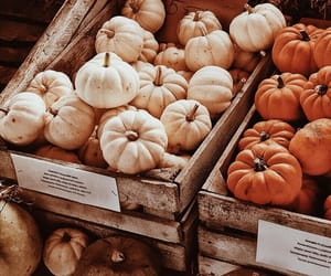 autumn, orange, and pumpkins image