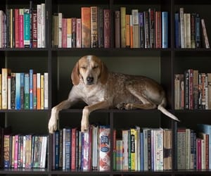 books, dog, and library image