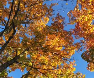 autumn, blue sky, and cold image
