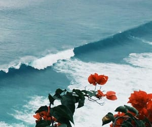 beautiful, flowers, and ocean image