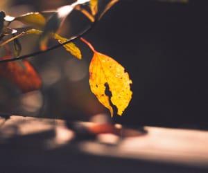 autumn, botanical, and forest image