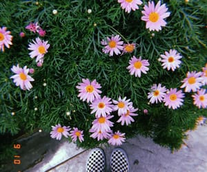 aesthetic, daisy, and checkerboard image