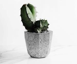 plants, cactus, and theme image