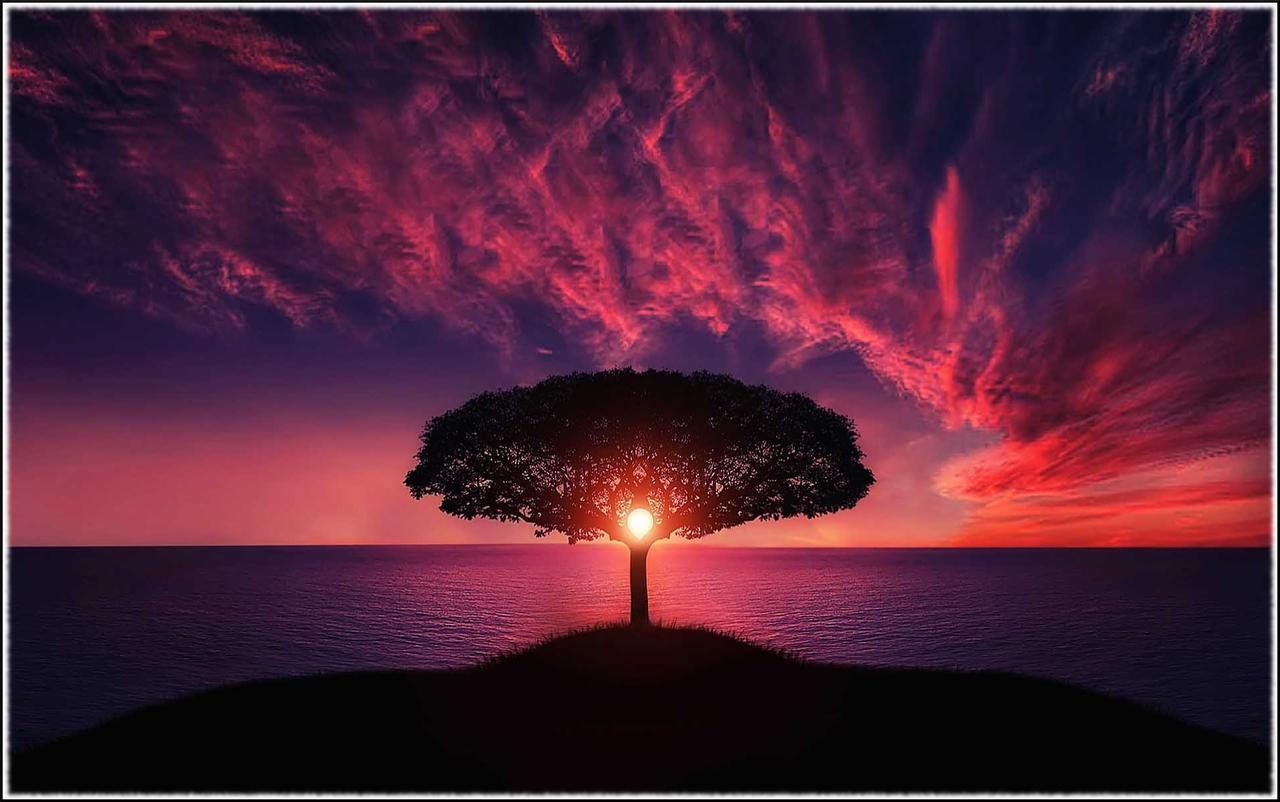 Awesome Purpleredblue Ish Sunset Sky Over Lonely Tree