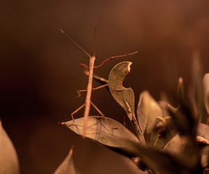 animal, nature, and cricket image