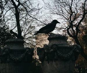 crow and animal image