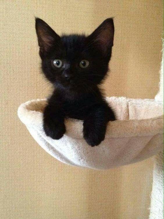 animals, dark, and cat lover image