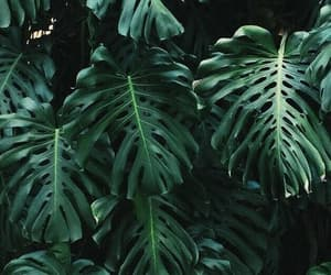 aesthetic, green, and verde image