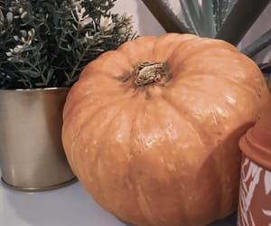 carving, golden, and pumpkin image
