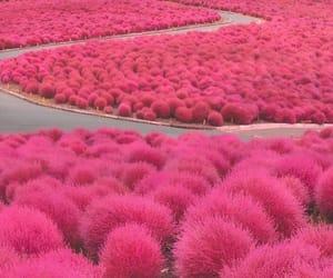 original, pink, and place image
