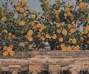lemon, yellow, and nature image