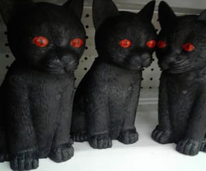 black, black cat, and cat image