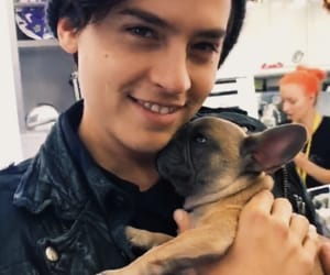 dog, handsome, and puppy image