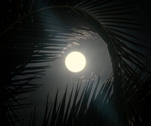 moon and palm trees image
